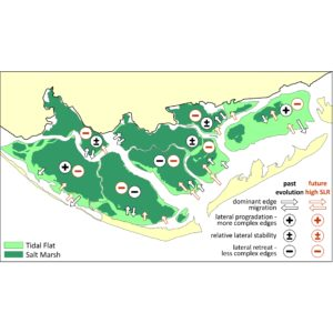 Past and future marsh adaptation: lessons learned from the Ria Formosa lagoon